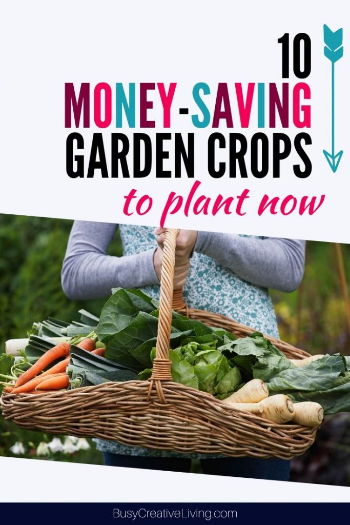 Basket of vegetables. 10 budget-friendly home garden crops